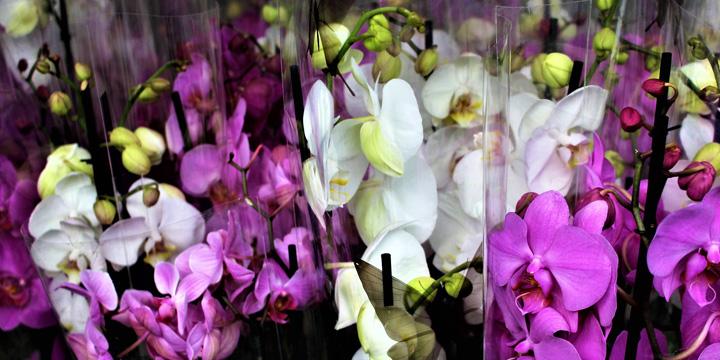 Top 7 Tipps mit denen Sie Ihre Orchidee wieder zum Blühen bringen #NV_33
