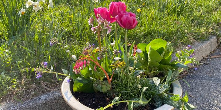 Blumen Frühling Tulpen Bunt Bild auf Leinwand Poster AUM-1K